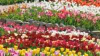 Экскурсия: Никитский ботанический сад-кактусовая оранжерея