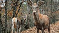 Экскурсия: По местам царской охоты