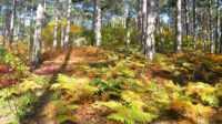 Экскурсия: Прогулка-экскурсия по Боткинской тропе (Индивидуальная)
