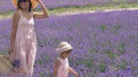 Экскурсия: Лавандовые поля